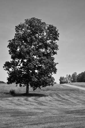 Black and white image of a tree in the countryside.