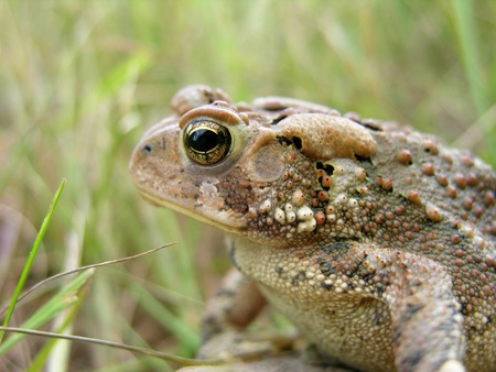 A macro shot of a Toad.