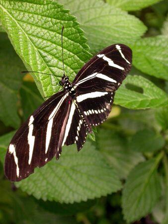 A butterfly landing on a leaf.
