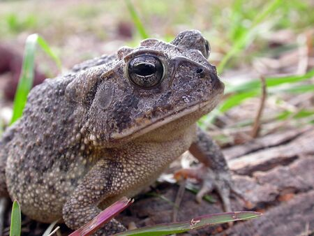 A macro shot of a brown Toad.