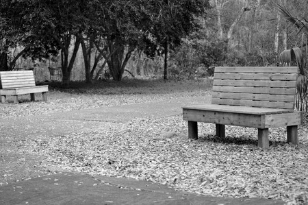 Two benches in a Florida park taken in black and white.  Zdjęcie Seryjne