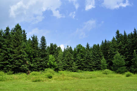 A lush green forest in upstate New York.