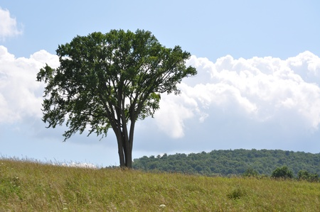 A tree by itself in a country field in upstate NY.