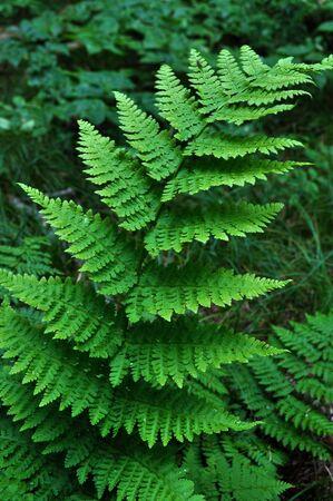 Paproć roślina głęboko w bujny las.