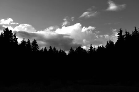 A silhouette shot of a forest of Evergreens.