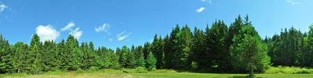 Panorama of a green Forest.  Stock Photo