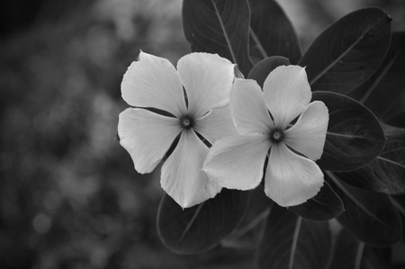 Two black and white flowers in a Florida garden.