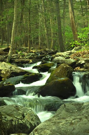 A stream trickling down some rocks in a woodland forest