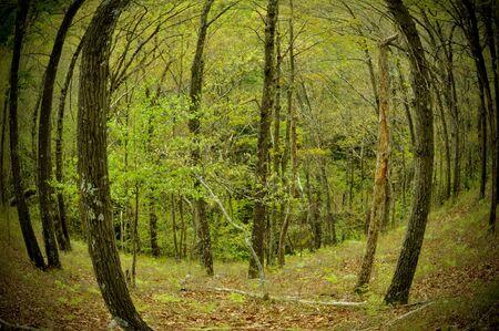 Fisheye lasu w górach Zdjęcie Seryjne