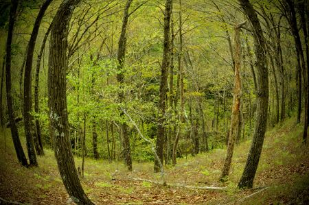 Fisheye of a forest in the mountains