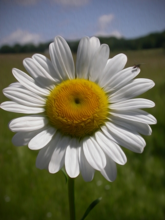 Filtr oleju farby stosowane do obrazu słonecznika