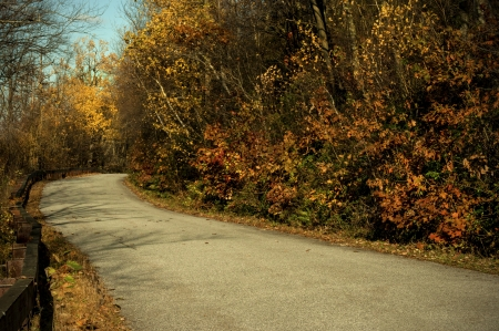 A country road in the park taken in the fall season