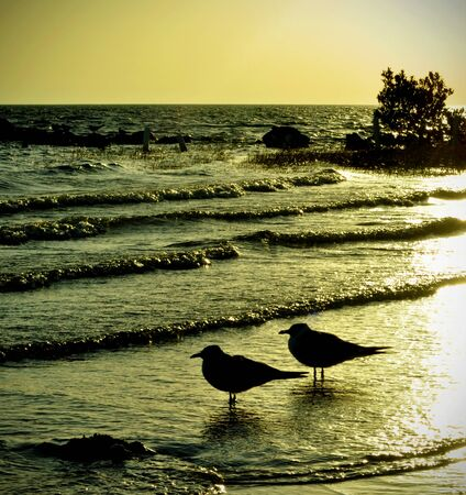 Pair of Seagulls in the Sunset