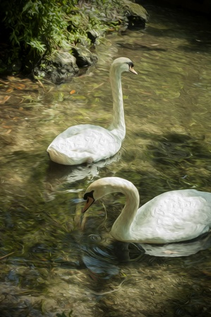 Painting Of Swans On A Lake  Stock Photo