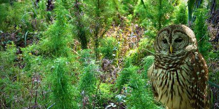 Owl W Lesie