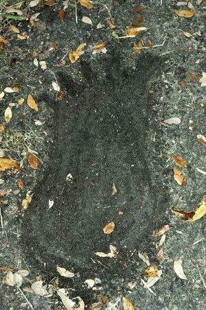 Fałszywy Big Foot Drukuj Zdjęcie Seryjne