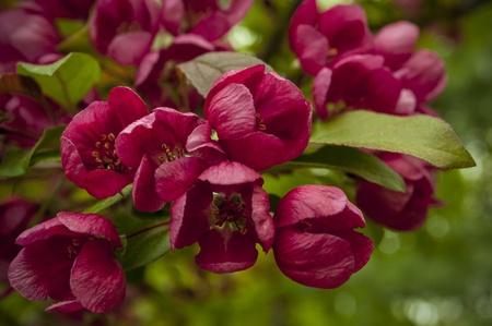Spring Flowers Reklamní fotografie