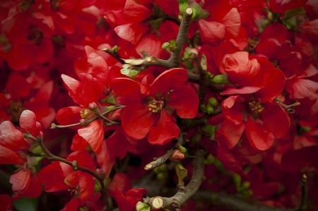 Red Spring Flowers Oil Paint  Reklamní fotografie