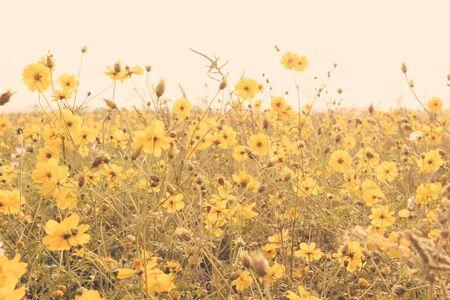 meadow  grass: Campo de flor amarilla pradera de c�sped retro vintage