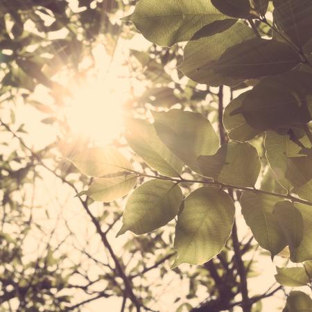 La luz del sol Foto de archivo - 35841625