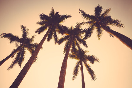 palm: coconut palm tree sunset silhouette vintage retro