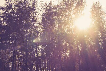 sunbeams: sunbeams in the woods