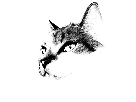 A black and white cat illustration Stock Photo