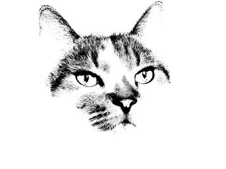 A black and white cat illustration