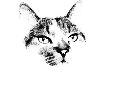 Un'illustrazione di gatto bianco e nero