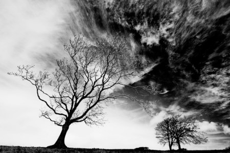 Monochrome silhouette of bare tree against a winter sky