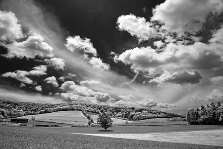 south downs: Monochrome landscape of the South Downs near Midhurst Stock Photo