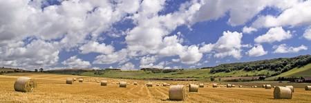hay bales: Panorama of hay bales at Findon
