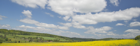 west sussex: Summer colour in West Sussex