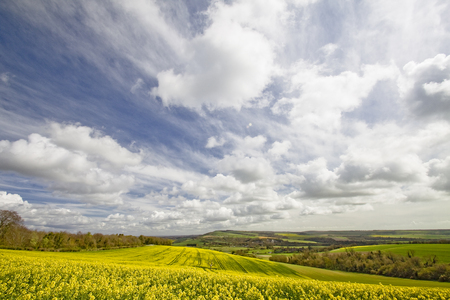 sussex: The best known tree in Sussex