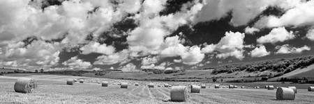 hay bales: Hay bales on the Long Furlong