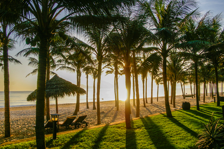 Tropical beach with palm trees and golden sand in beautiful tropical Vietnam