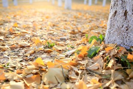 defoliation: Defoliation Stock Photo