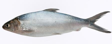fish scale: Milkfish isolated  Stock Photo