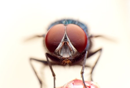 compound: fly macro portrait