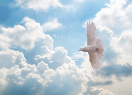 上空を飛ぶ白い鳩 写真素材