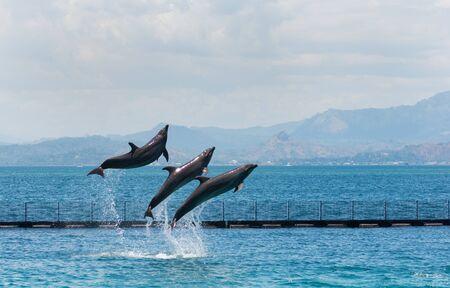 three flying bottle-nose dolphins Zdjęcie Seryjne
