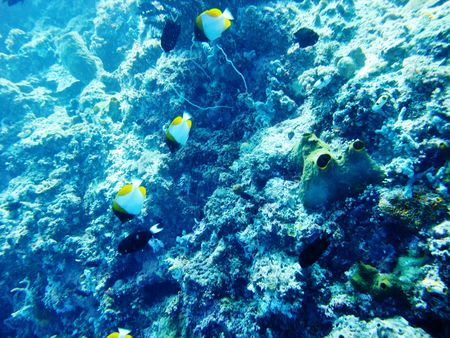 School of fishes underwater in Manado photo