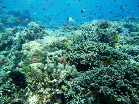School of fishes off Bunaken island  Manado Indonesia photo