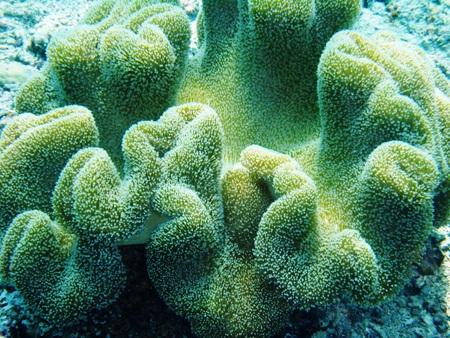 hard coral: Soft coral underwater off Bunaken Island, Indonesia Stock Photo