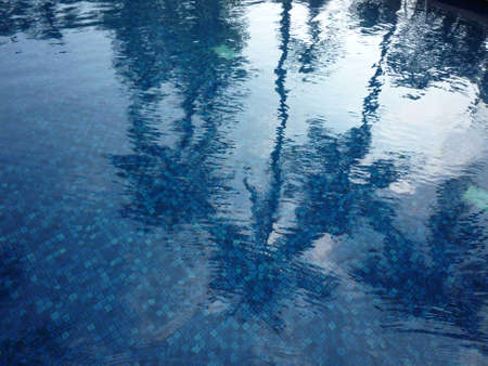 reflect: Coconut shadow reflect on the pool water