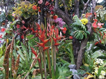 bird of paradise plant: Bird of Paradise Plant Stock Photo