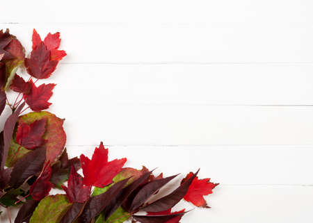 purples: Autumn: Fall Leaves Of Reds And Purples Background