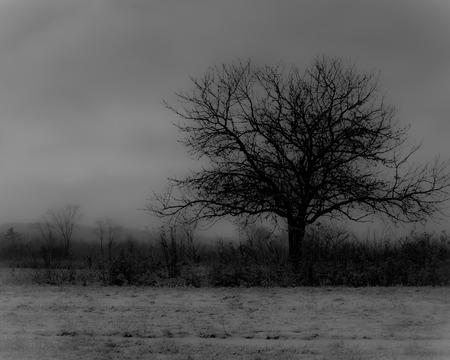haunting: Single tree in field