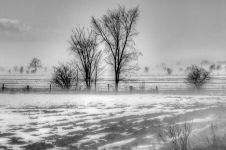 fog white: Foggy spring day. Black and white image. Stock Photo