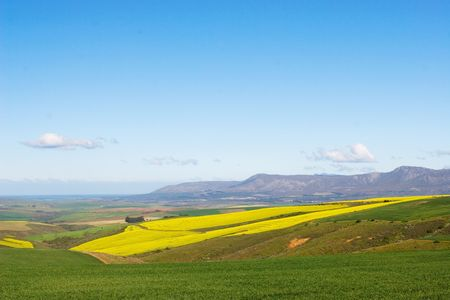 Field of Flowers - Western Cape, South Africa Stock Photo